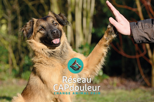 capdouleur2redim